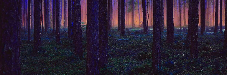 ForestBlueLight